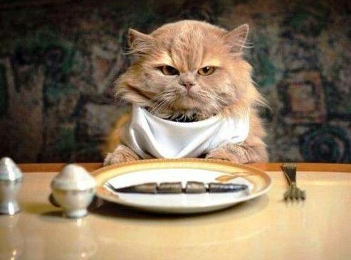hangry-cat